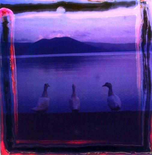 Oche lago di Vico VT