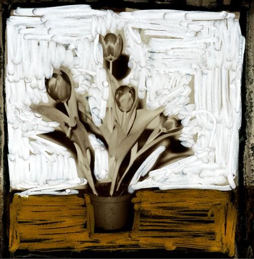 Tulipani RM