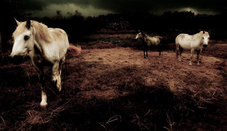 blera cavalli da tiro