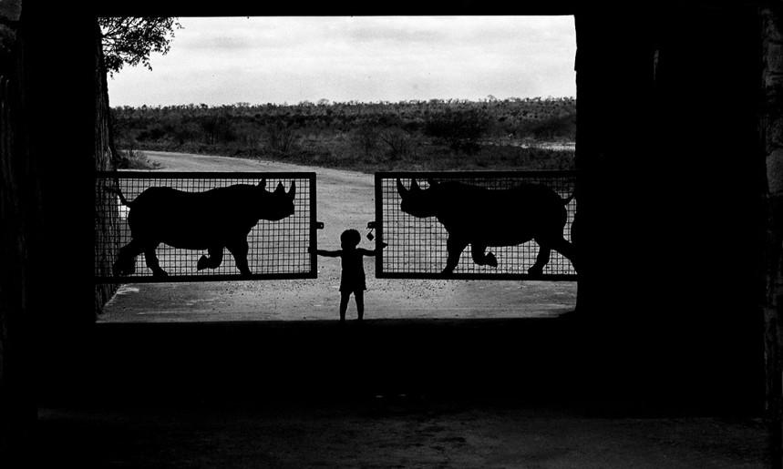 Parco Tsavo Kenia