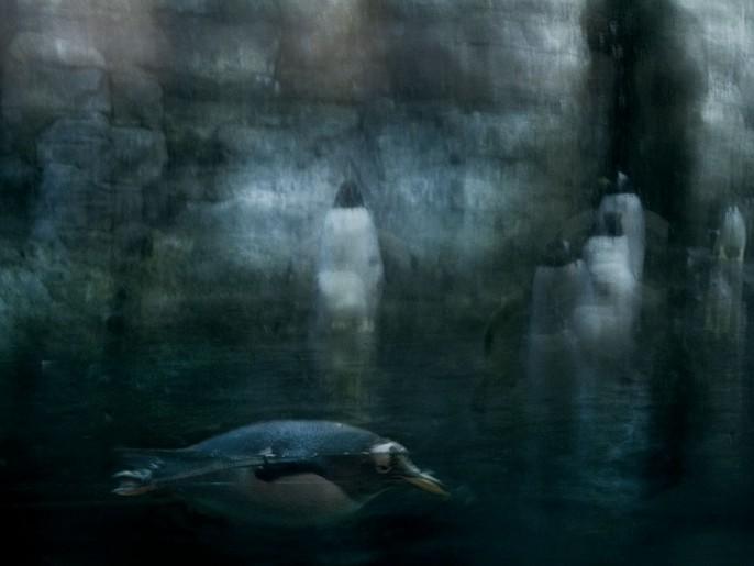 Pinguini Acquario Valencia